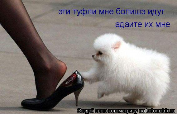 Котоматрица: эти туфли мне болишэ идут адаите их мне