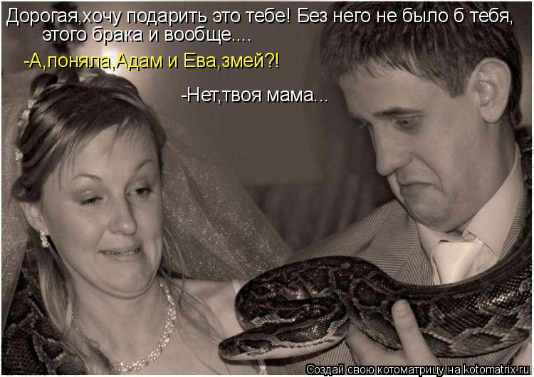 Котоматрица: Дорогая,хочу подарить это тебе! Без него не было б тебя, этого брака и вообще.... -А,поняла,Адам и Ева,змей?! -Нет,твоя мама...