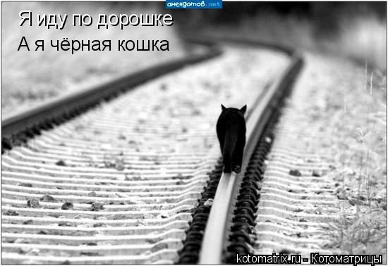 Котоматрица: Я иду по дорошке  А я чёрная кошка