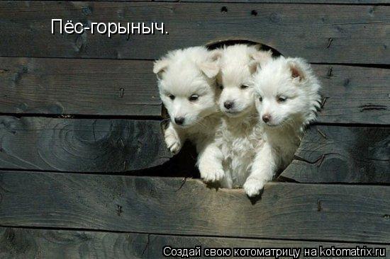 Котоматрица: Пёс-горыныч.