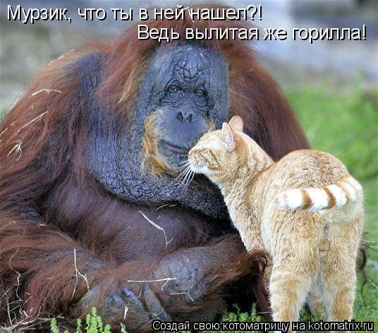 Котоматрица: Мурзик, что ты в ней нашел?! Ведь вылитая же горилла!
