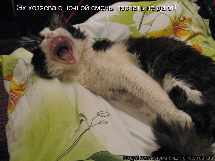 Котоматрица: Эх,хозяева,с ночной смены поспать не дают!