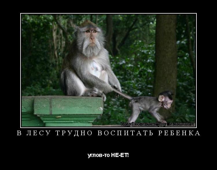 Котоматрица: В лесу трудно воспитать ребенка углов-то НЕ-ЕТ!