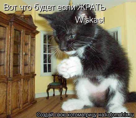 Котоматрица: Вот что будет если ЖРАТЬ Wiskas!