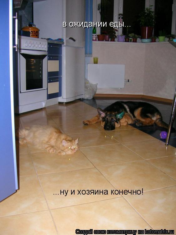 Котоматрица: в ожидании еды... ...ну и хозяина конечно!