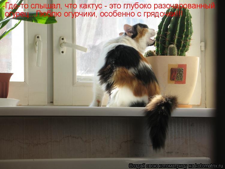 Котоматрица: -Где-то слышал, что кактус - это глубоко разочарованный огурец...Люблю огурчики, особенно с грядочки!!!