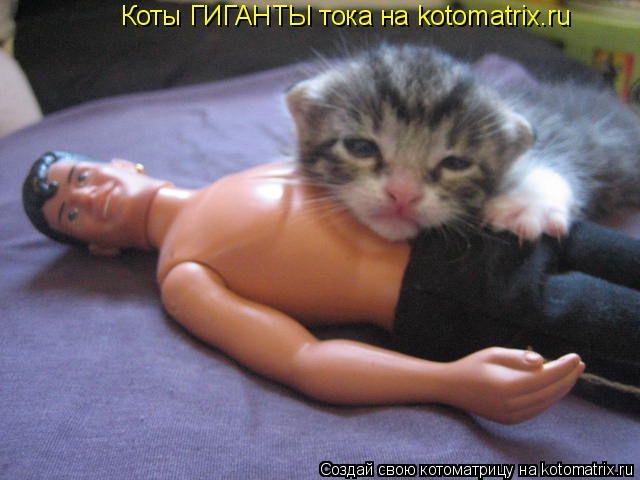 Котоматрица: Коты ГИГАНТЫ тока на kotomatrix.ru