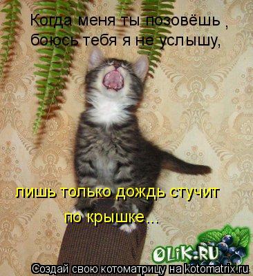 Котоматрица: Когда меня ты позовёшь , лишь только дождь стучит боюсь тебя я не услышу, по крышке...