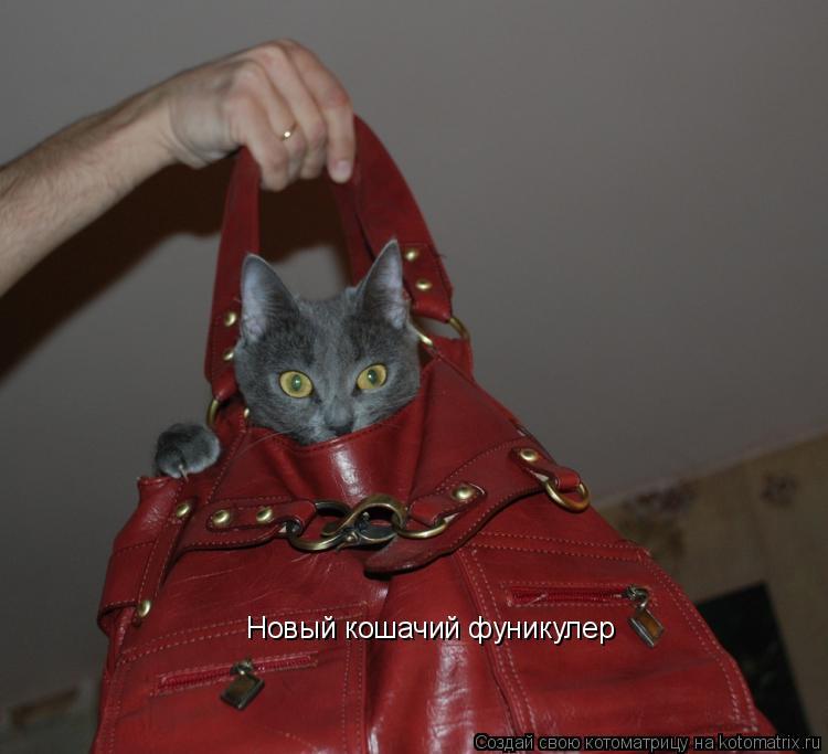 Котоматрица: Новый кошачий фуникулер