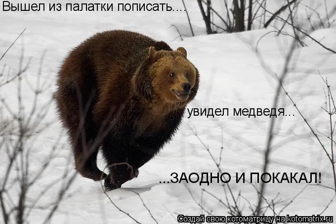 Котоматрица: Вышел из палатки пописать.... увидел медведя... ...ЗАОДНО И ПОКАКАЛ!