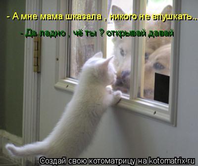 Котоматрица: - А мне мама шказала , никого не впушкать...  - Да ладно , чё ты ? открывай давай