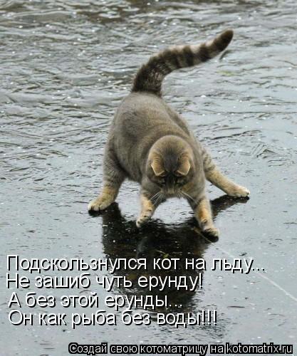 Котоматрица: Подскользнулся кот на льду... Не зашиб чуть ерунду! А без этой ерунды... Он как рыба без воды!!!