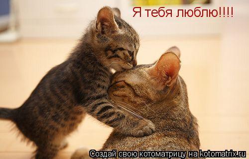 Котоматрица: Я тебя люблю!!!!