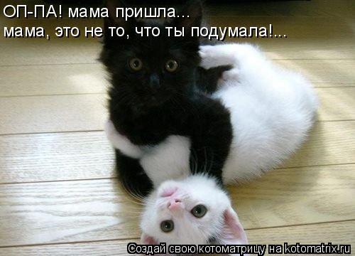 Котоматрица: ОП-ПА! мама пришла... мама, это не то, что ты подумала!...