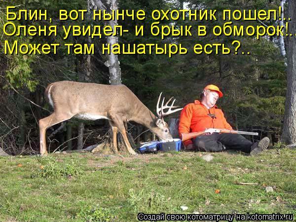 Котоматрица: Блин, вот нынче охотник пошел!.. Оленя увидел- и брык в обморок!.. Может там нашатырь есть?..