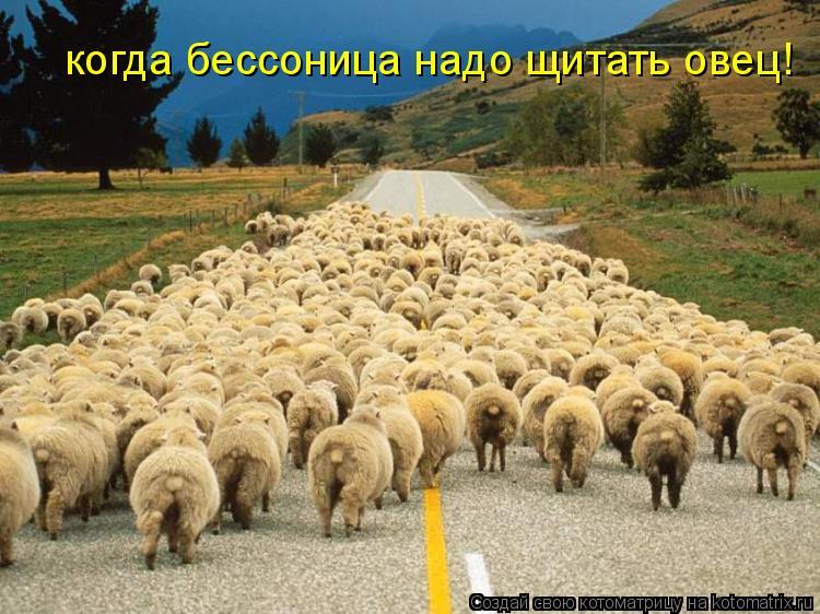 Котоматрица: когда бессоница надо щитать овец!