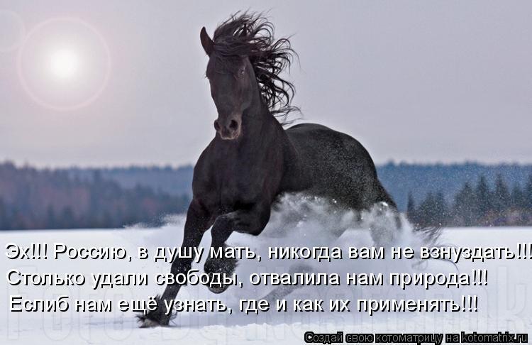 Котоматрица: Эх!!! Россию, в душу мать, никогда вам не взнуздать!!! Столько удали свободы, отвалила нам природа!!! Еслиб нам ещё узнать, где и как их применят