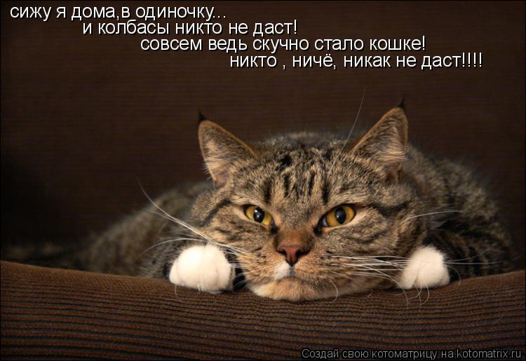Котоматрица: сижу я дома,в одиночку... и колбасы никто не даст! совсем ведь скучно стало кошке! никто , ничё, никак не даст!!!!