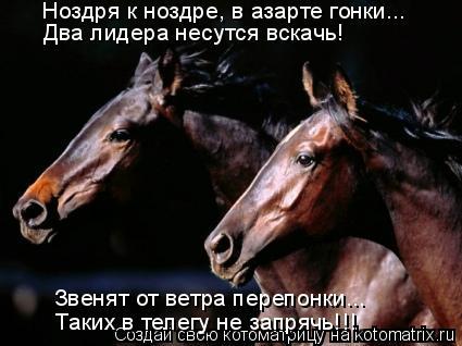 Котоматрица: Ноздря к ноздре, в азарте гонки... Два лидера несутся вскачь! Звенят от ветра перепонки... Таких в телегу не запрячь!!!