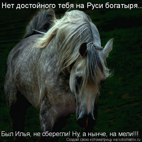 Котоматрица: Нет достойного тебя на Руси богатыря... Был Илья, не сберегли! Ну, а нынче, на мели!!!