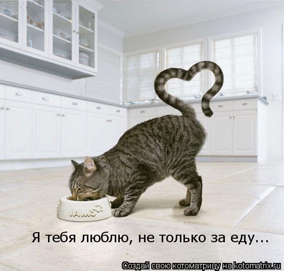 Котоматрица: Я тебя люблю, не только за еду...