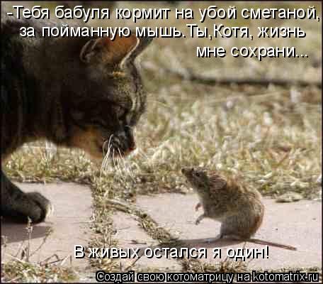 Котоматрица: -Тебя бабуля кормит на убой сметаной, за пойманную мышь.Ты,Котя, жизнь  мне сохрани...  В живых остался я один!