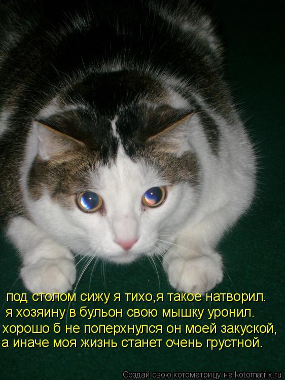 Котоматрица: под столом сижу я тихо,я такое натворил. я хозяину в бульон свою мышку уронил. хорошо б не поперхнулся он моей закуской, а иначе моя жизнь ста