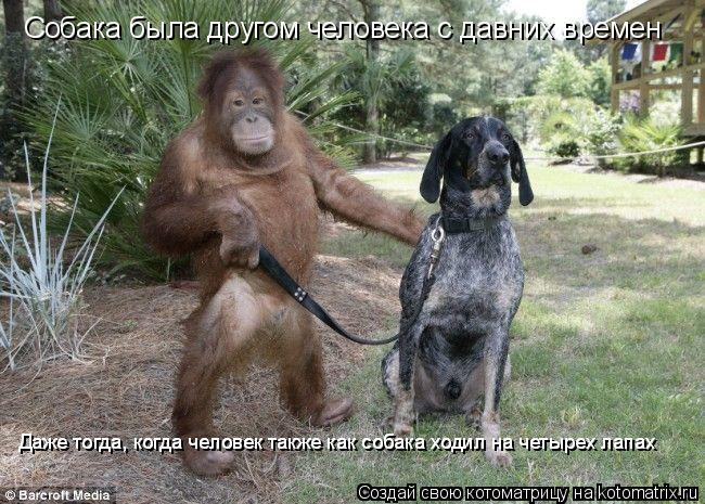 Котоматрица: Собака была другом человека с давних времен Даже тогда, когда человек также как собака ходил на четырех лапах Даже тогда, когда человек так