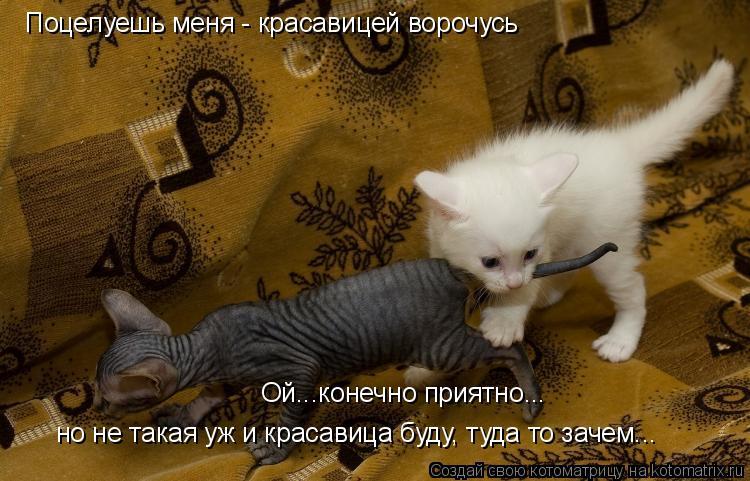 Котоматрица: Поцелуешь меня - красавицей ворочусь Ой...конечно приятно... но не такая уж и красавица буду, туда то зачем...