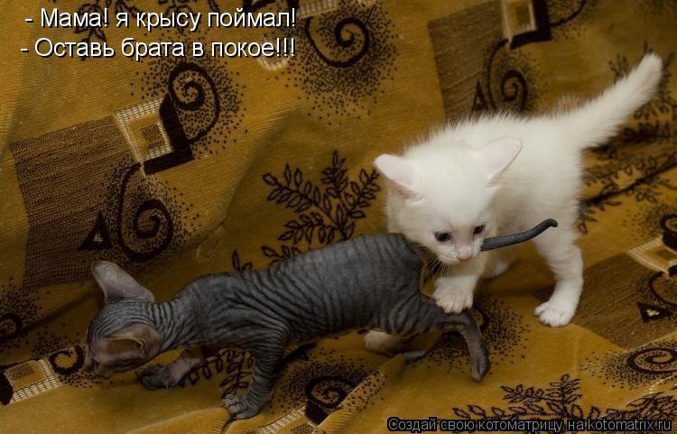 Котоматрица: - Мама! я крысу поймал! - Оставь брата в покое!!!