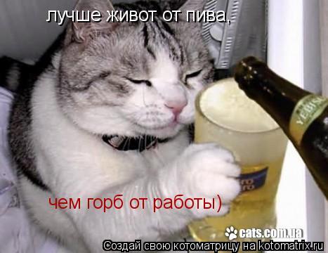 Котоматрица: лучше живот от пива, чем горб от работы)