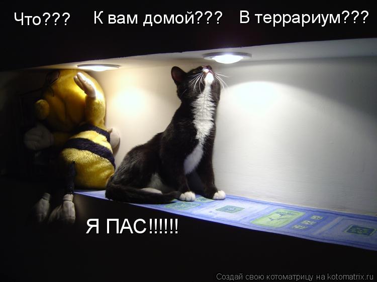 Котоматрица: Что???      К вам домой??? В террариум??? Я ПАС!!!!!!