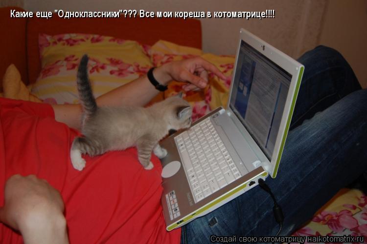 "Котоматрица: Какие еще ""Одноклассники""??? Все мои кореша в котоматрице!!!!"
