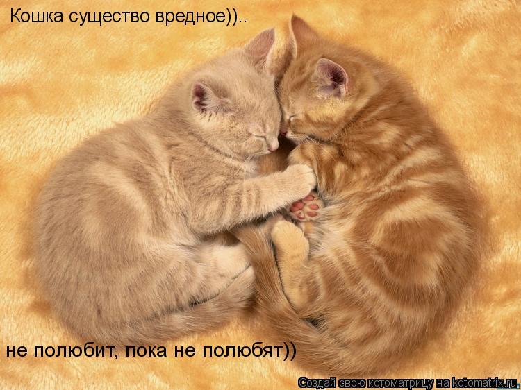 Котоматрица: Кошка существо вредное)).. не полюбит, пока не полюбят))