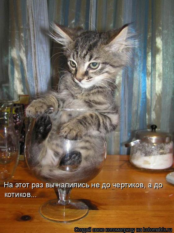 Котоматрица: На этот раз вы напились не до чертиков, а до котиков...