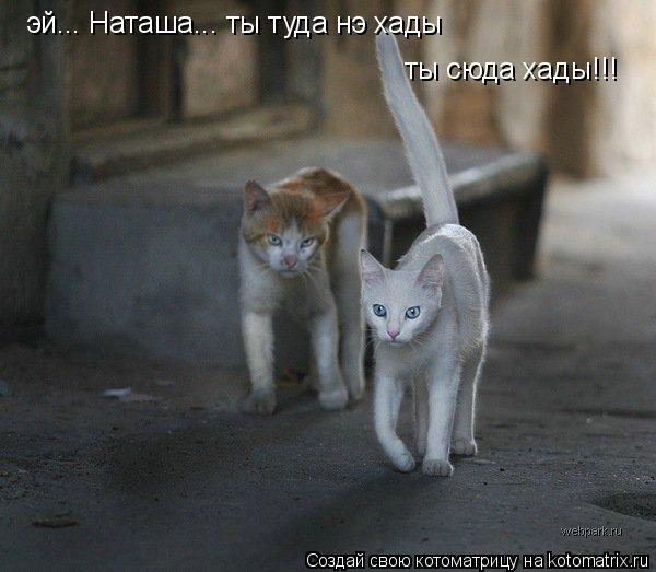 Котоматрица: эй... Наташа... ты туда нэ хады ты сюда хады!!!