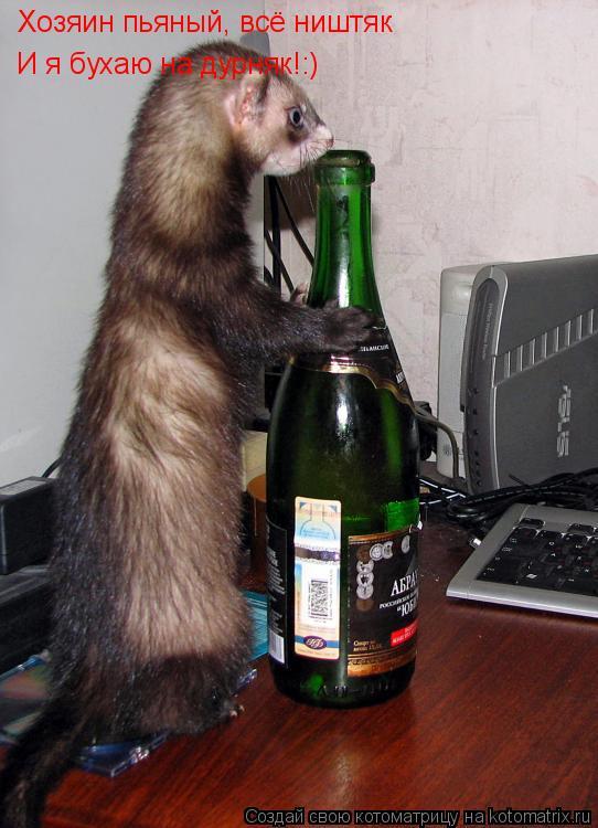 Котоматрица: Хозяин пьяный, всё ништяк И я бухаю на дурняк!:)
