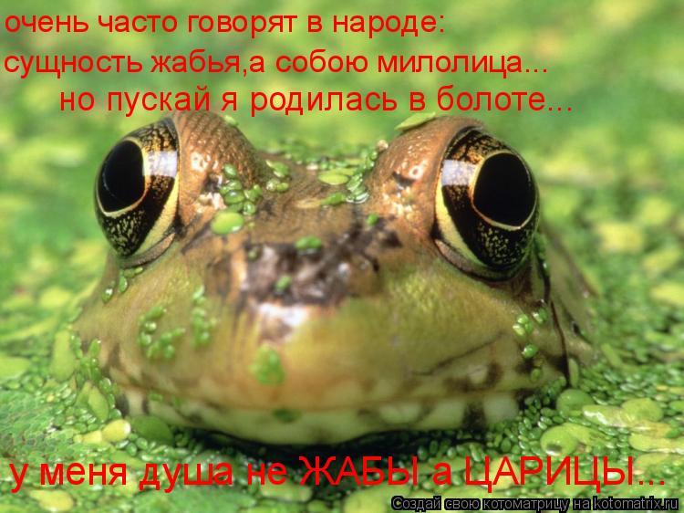 Котоматрица: очень часто говорят в народе: сущность жабья,а собою милолица... но пускай я родилась в болоте... у меня душа не ЖАБЫ а ЦАРИЦЫ...