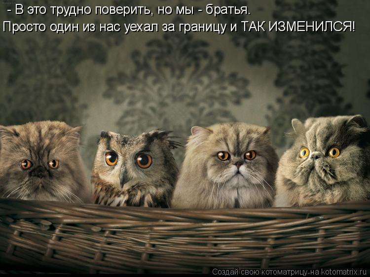 Котоматрица: - В это трудно поверить, но мы - братья.  Просто один из нас уехал за границу и ТАК ИЗМЕНИЛСЯ!