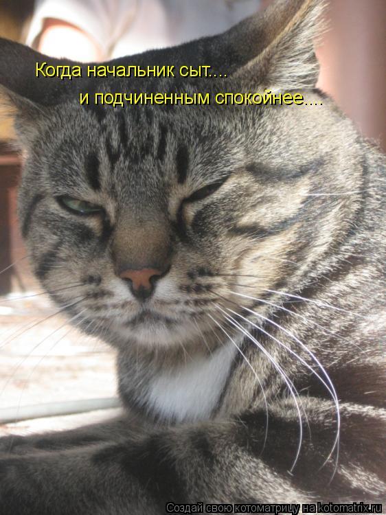 Котоматрица: Когда начальник сыт.... и подчиненным спокойнее....