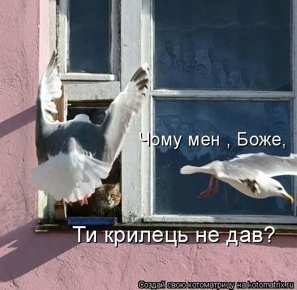 Котоматрица: Чому мені, Боже,  Ти крилець не дав?