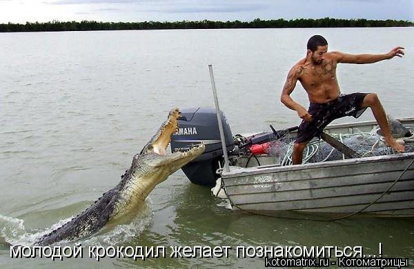 Котоматрица: молодой крокодил желает познакомиться...!