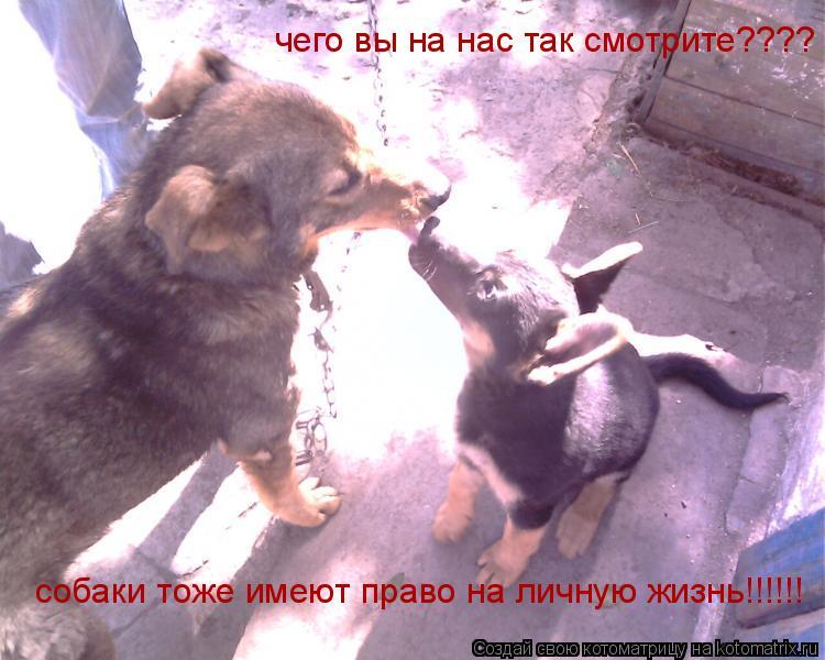 Котоматрица: чего вы на нас так смотрите????  чего вы на нас так смотрите????  собаки тоже имеют право на личную жизнь!!!!!!
