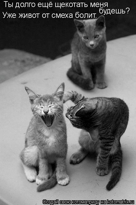Котоматрица: Ты долго ещё щекотать меня  будешь? Уже живот от смеха болит.