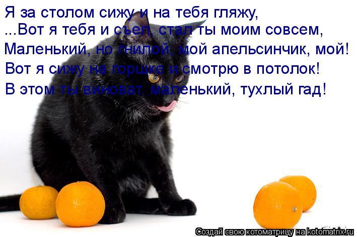 Котоматрица: Я за столом сижу и на тебя гляжу, ...Вот я тебя и съел, стал ты моим совсем, Маленький, но гнилой, мой апельсинчик, мой! Вот я сижу на горшке и смо