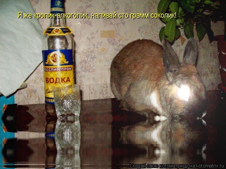 Котоматрица: Я же кролик-алкоголик, наливай сто грамм соколик!