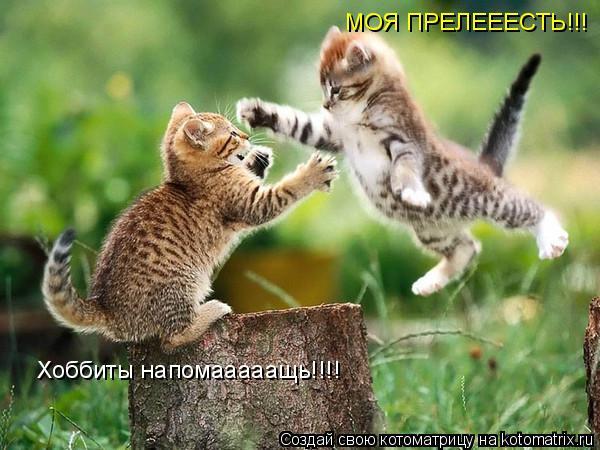 Котоматрица: МОЯ ПРЕЛЕЕЕСТЬ!!! Хоббиты напомааааащь!!!!