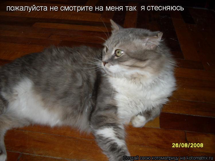 Котоматрица: пожалуйста не смотрите на меня так я стесняюсь