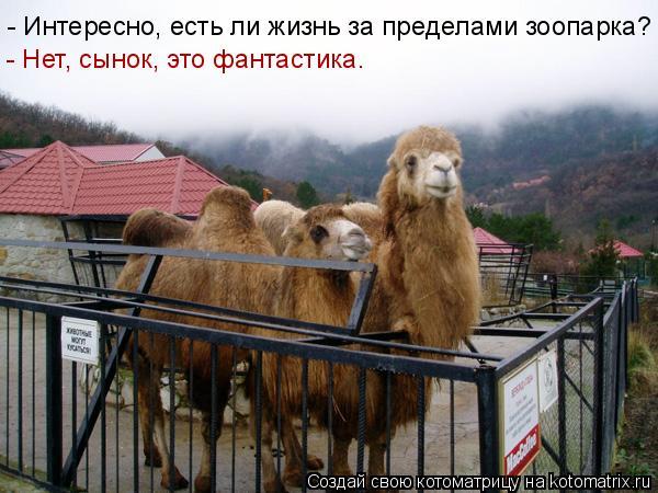 Котоматрица: - Интересно, есть ли жизнь за пределами зоопарка? - Нет, сынок, это фантастика.