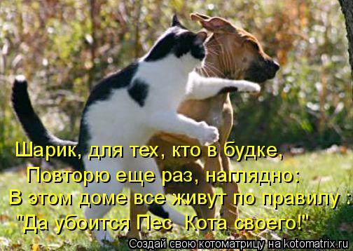 """Котоматрица: Шарик, для тех, кто в будке,  В этом доме все живут по правилу : """"Да убоится Пес  Кота своего!"""" Повторю еще раз, наглядно:"""